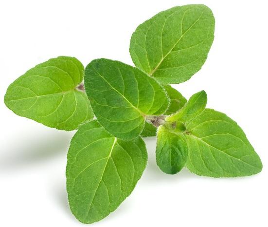 gyógynövények a legtöbb parazitához